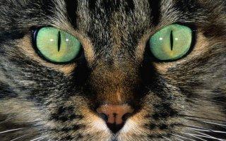 У кошки заболели глазки: лечим правильно недуги