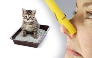 Можно ли вывести запах кошачей мочи с дивана?