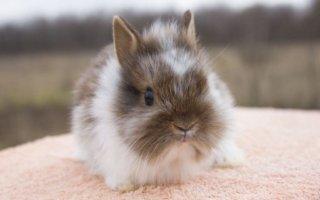 Воняют ли декоративные кролики?