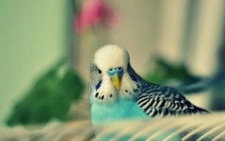 Какая клетка нужна Корелле и Волнистому попугайчику?