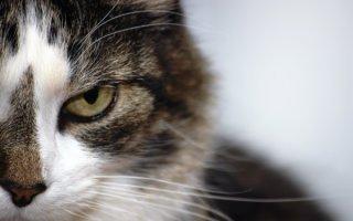 Медикаментозные успокоительные для кошечки