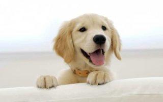 Сыпь и облысение – серьезные кожные симптомы у собаки