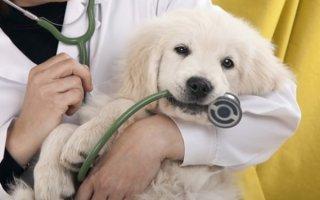 На страже здоровья: витамины и лекарственные препараты для собак
