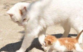 Когда котята начинают ходить?