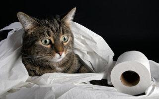 Как за 12 дней научить кошку ходить в унитаз? Проверено – работает!