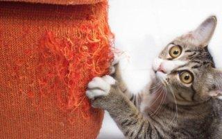 Зачем нужна кошачья когтеточка?