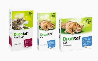 Дронтал на страже здоровья вашей кошки