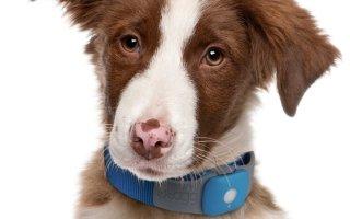 Как выбрать для собаки ошейник от блох и клещей