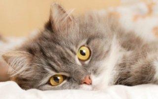 Помогаем кошке с колитом или гастритом