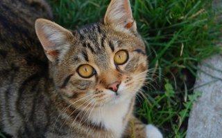 Сколько кошка проживет без воды и еды?