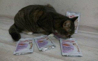 Новая формула питания для стерилизованных кошек – Royal Canin Sterilised
