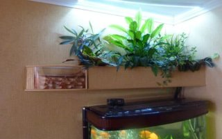 Фитофильтр – полезное решение для аквариума