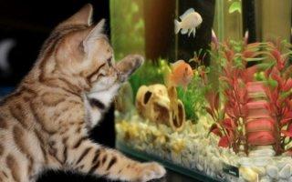 Чистка и гигиена аквариума в домашних условиях