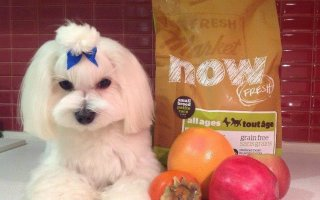 Питательный корм для собак Now Fresh