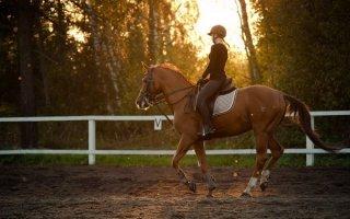 Обучение верховой езде или как стать профессиональным всадником?