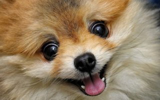 Почему у собаки сухой нос?
