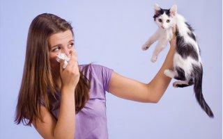 Кошка в доме или как избавиться от аллергии?