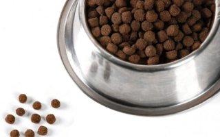Еда для животных, как для людей: корма для собак из Нидерландов