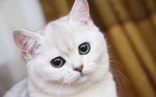 Опухоль на животе у кошечки – что это может быть?