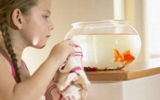 Как сифонить грунт в аквариуме?