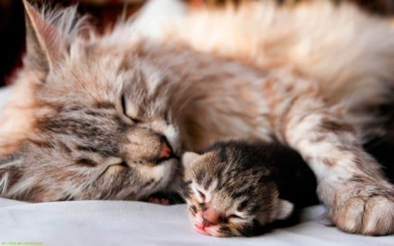 мурлыканье кошки