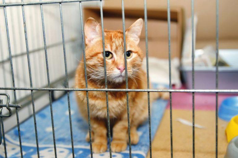 Отдать котенка в приют