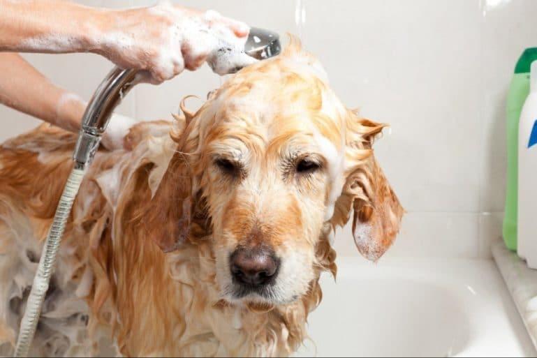 Частое мытье с шампунем - одна из причин линьки