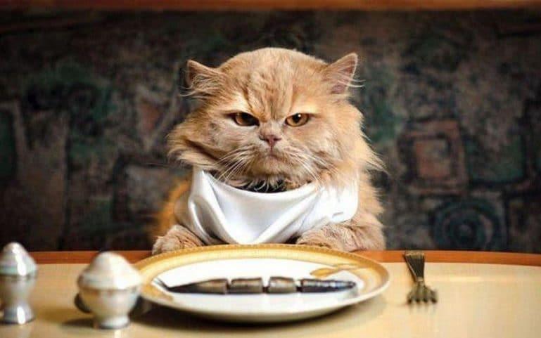 Без еды кошка проживет 5-10 дней