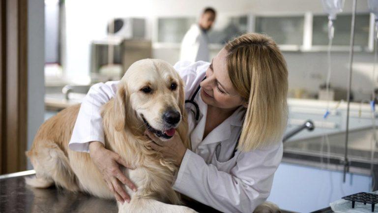При первых симптомах нужно показать собаку врачу