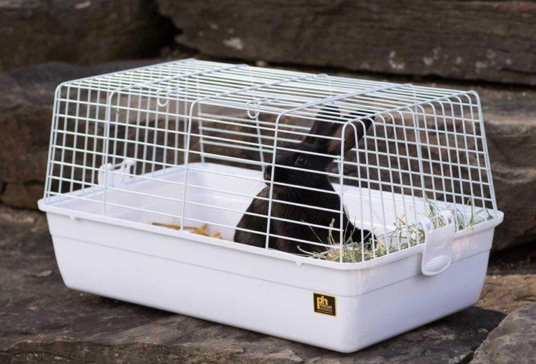 Кролик воняет при неправильном уходе за клеткой