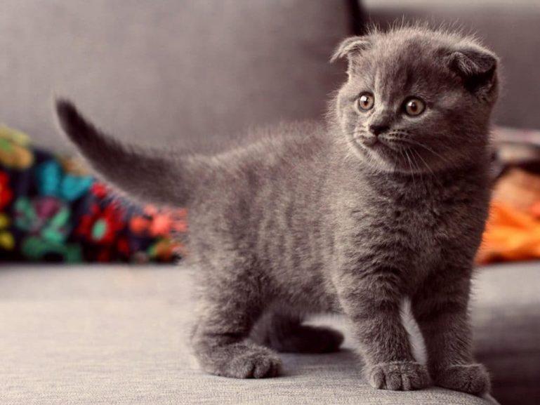отлучение котят от кошки