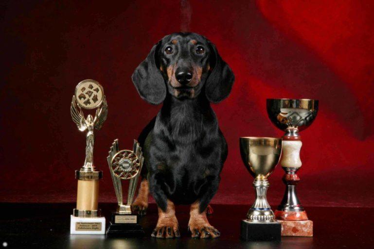 Собака с наградами