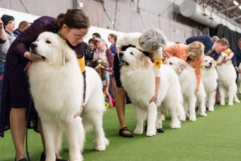 Нулевая родословная собаки
