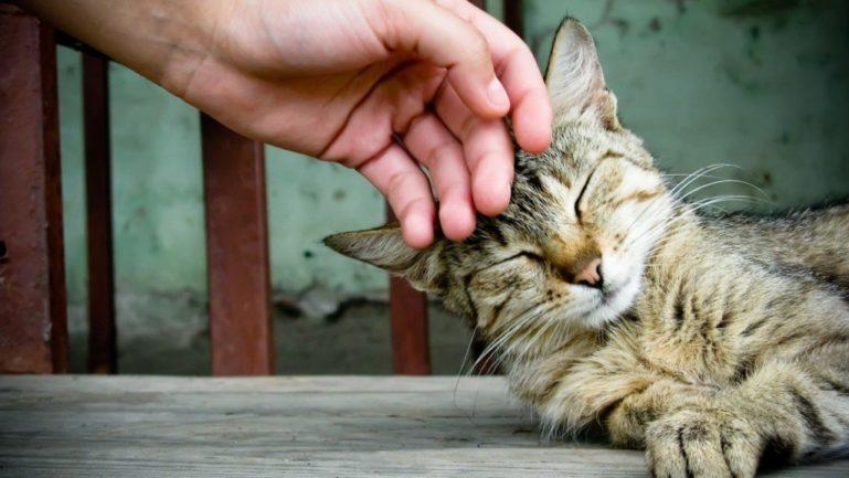 Проявление ласки снимет напряжение у кошки
