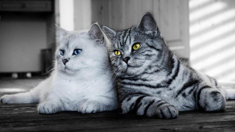 дружба котов