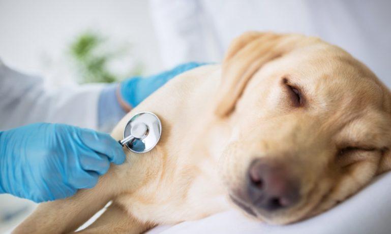 Если не лечить собаку, наступит смерть