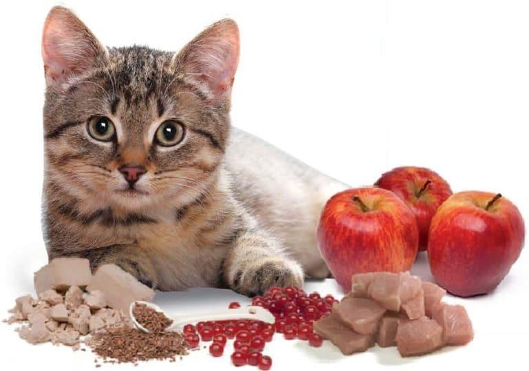 Питание котов должно быть сбалансированным