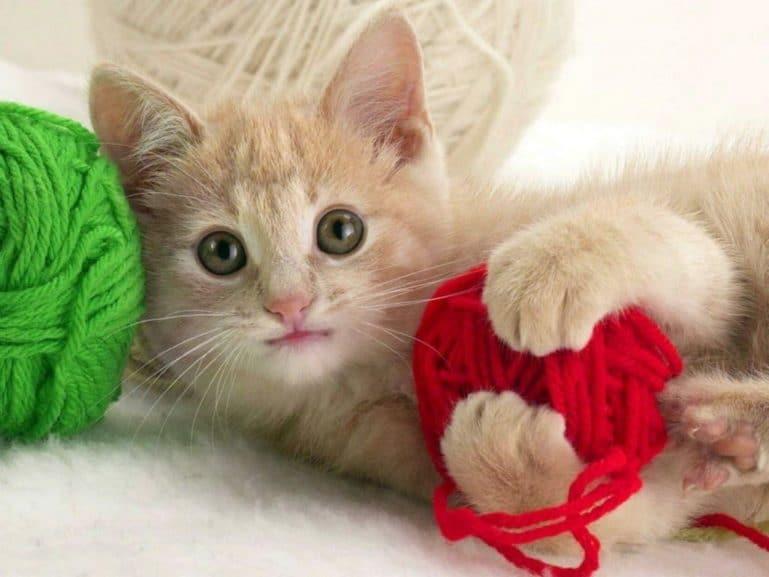 играющий котенок