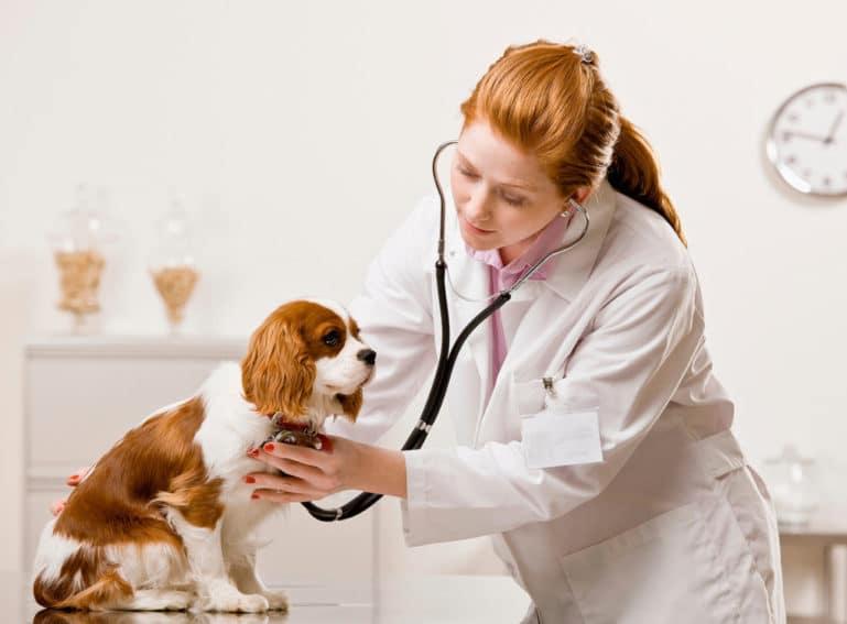 Провоцировать рвоту нужно по разрешению врача
