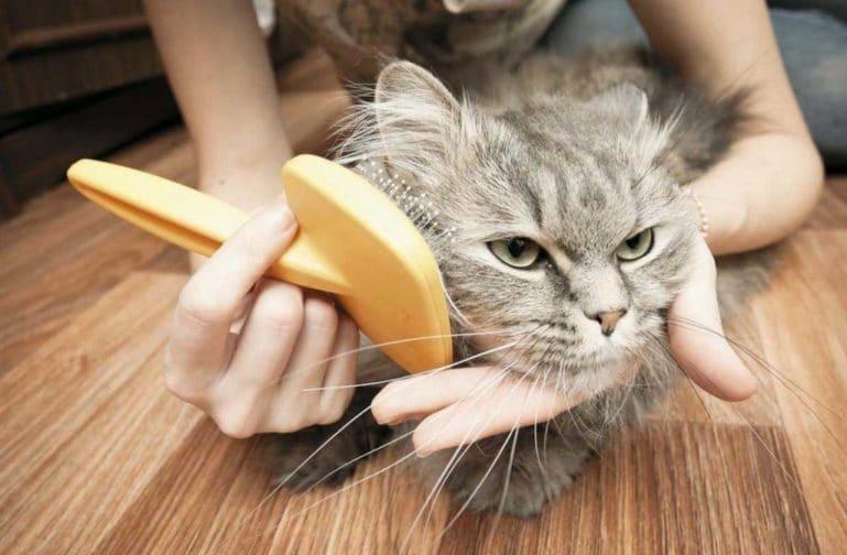 как расчесать колтуны у кошки