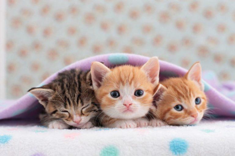 Периоды взросления кошек