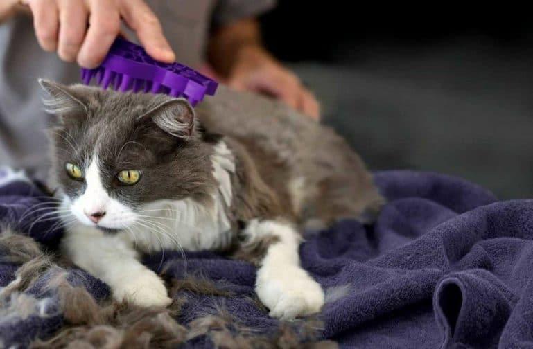 колтуны у кошек на спине