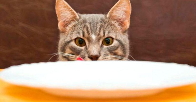 кошка-питание