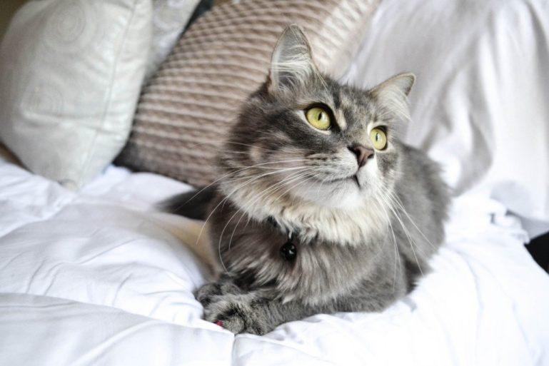 кот в постели