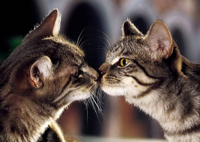 "Два котика ""целуются"""