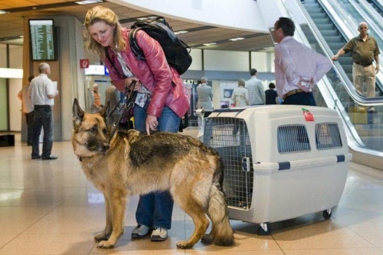переноска для собак в самолете