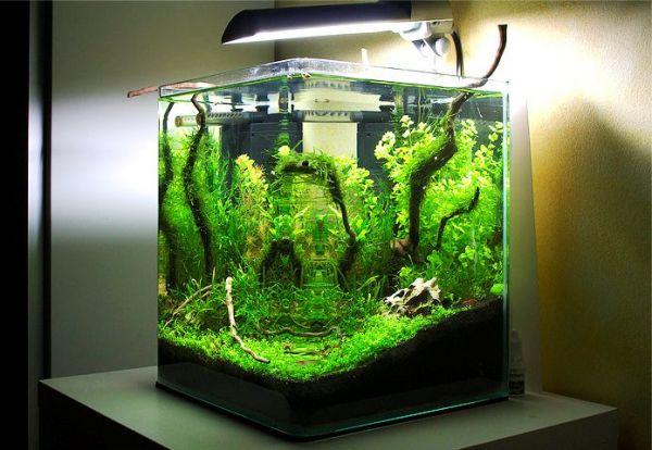 Нано-аквариум фирмы Aquael