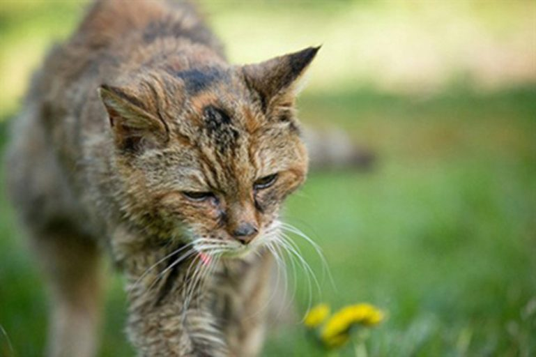 Старые кошки страдают недержанием