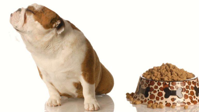 Неправильный корм для собаки