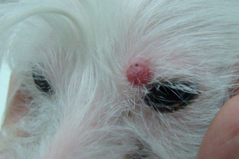рак кожи у собаки